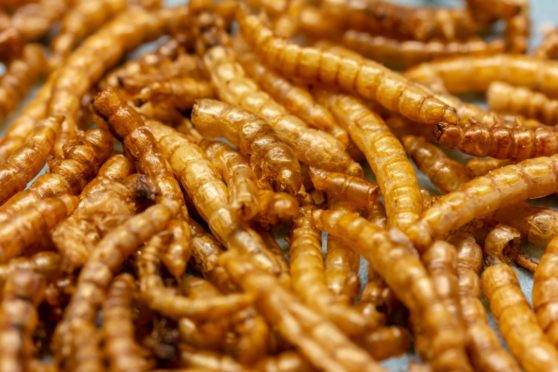 The European Commission has approved a project looking into the use of mealworms as a form of food.