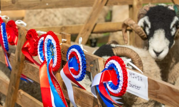 COMPETITION: Sheep breeds will go head to head for prizes at the online Scottish Agricultural Show.