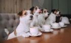 A trip to the local dog cafe made David Knight think of the bark and bite of Scottish politics
