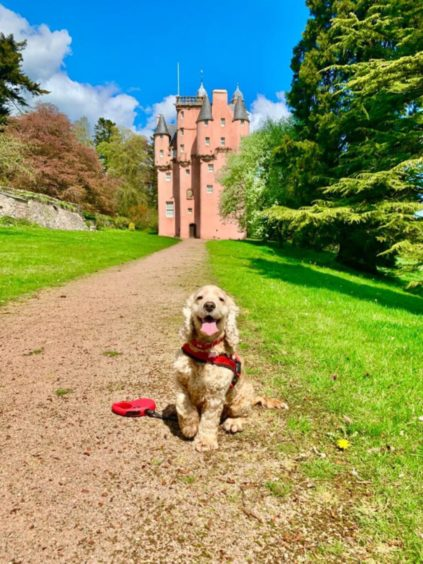 Minnie enjoying the sun at Craigievar Castle. She lives with the Campbell Hepburns and her dog pals in Tillyfourie.