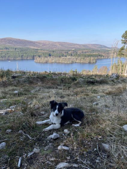 This photo of five-month-old Jess was taken overlooking Loch Moy. Jess lives with Christine MacDonald, at Moy.