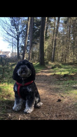 This is little Lexi Loo pictured on a walk at Carnie Woods. She lives with her owner Kerrie MacDonald in Westhill, Aberdeenshire.