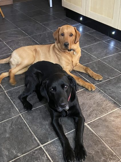 Angus and Lola waiting on a word from owners Colin and Marjory Richard, from Wick.