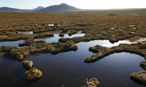 Scotland has missed another environmental target.