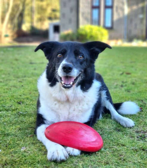 Kath O'Connor, from Maud, sent in these pics of Bracken the dog.