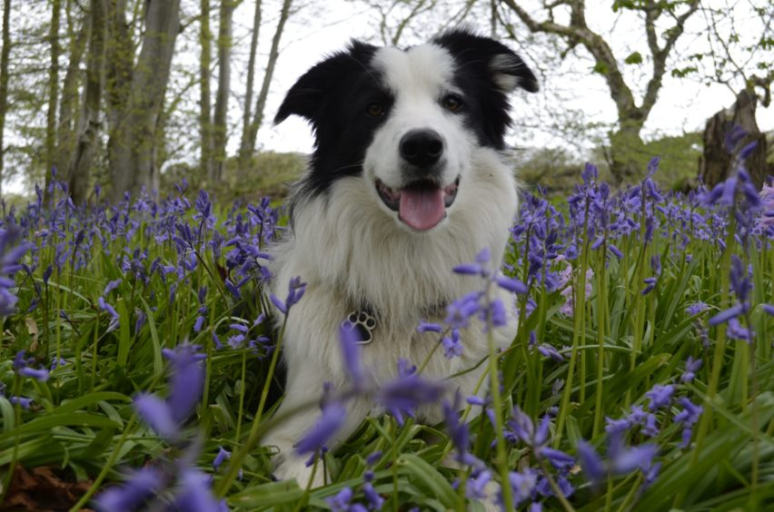 This lovely lad is Glenn, pictured at Fetternear Estate. Glenn lives with Garry Garrow, in Inverurie.