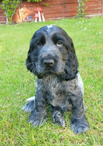 This is the very adorable Dottie, who is only eight weeks old. She lives in Stonehaven with Claire Davis.