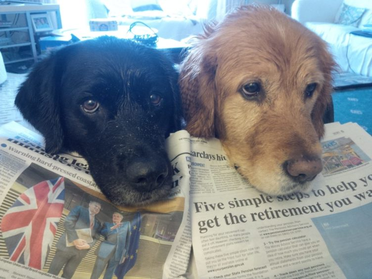 No girls, no more walkies, I want to read the P&J. Ex-guide dogs Eva and Karen are back at puppy home in Rathen with Bob Sinclair, following their well-earned retirement.