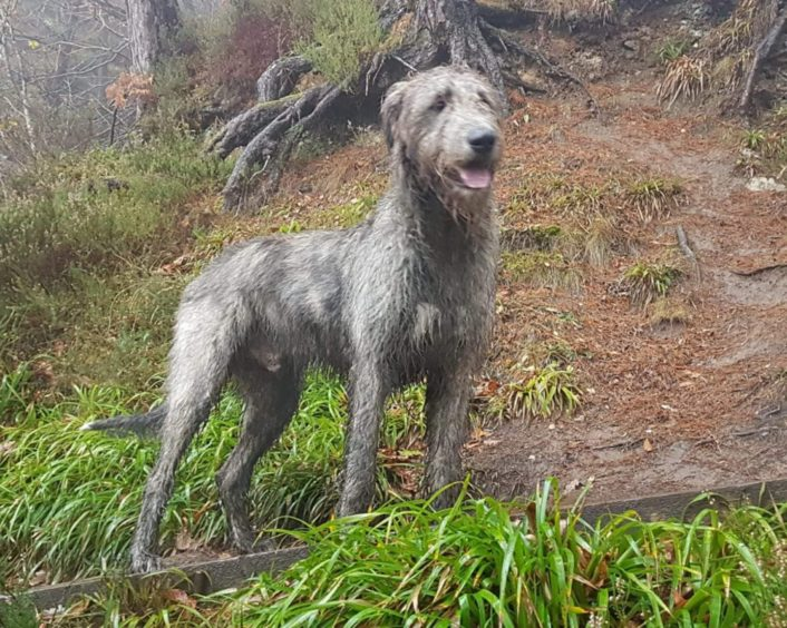 Joanne Rodgers, from Dingwall, sent us this photo of her dog, Ragnar, taken at Aldi Burn woodland walk, near Tain.