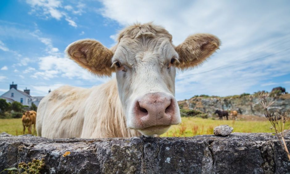 MSPs have been debating the impact a free trade agreement with Australia will have on Scottish farmers