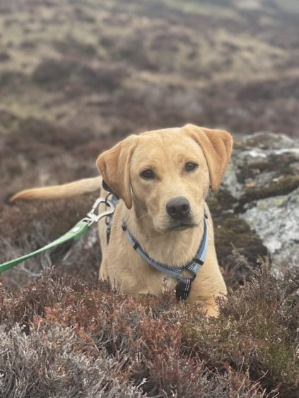 Seven-month old Hester, from Aberdeen, on a short walk up Glen Callater, near Braemar. Picture sent in by Miles Atkinson.