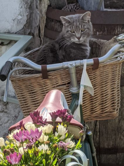 This cute cat is called Harley, and lives in Grange, near Keith, with Alison Gelling.