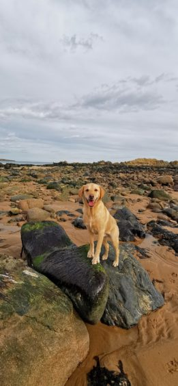 Megan Cowieson, from Ellon, took this picture of her dog, Jura, at his favourite place, Cruden Bay beach.