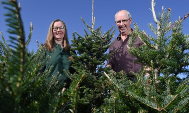 Jean and Roger Glennie are letting visitors see where their Christmas trees come from. Pictures by Kenny Elrick.