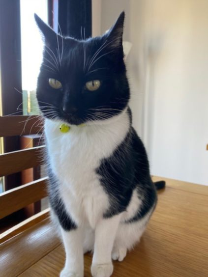This is Lulu, who also lives with Susan Warren in Bucksburn, Aberdeen.