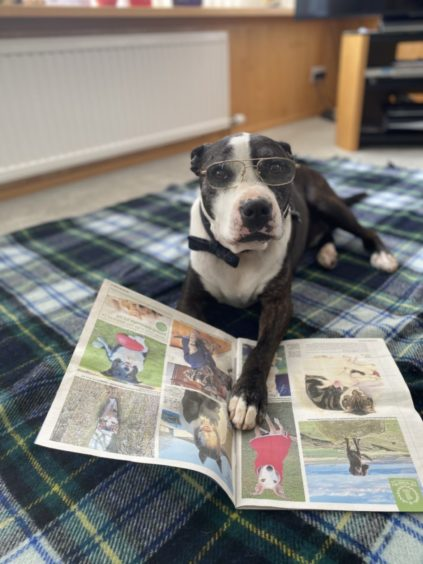 Marley enjoys reading his P&J – with a little help from Robyn Spice in Brechin.