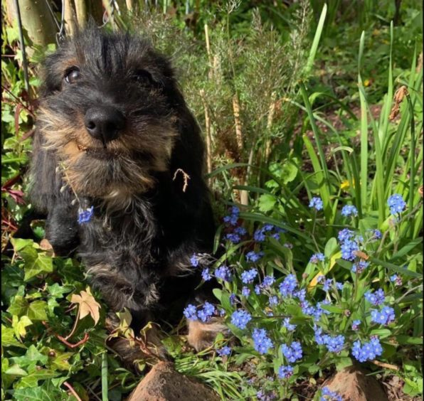 Mo Fettes from Crathes, sent us this happy picture of Primrose.