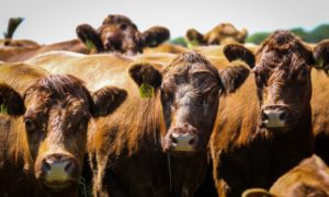 Scottish farming leaders have expressed concerns over the proposed trade deal between the UK and Australia.