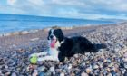 Amanda Morrison, from Craigellachie, sent us this picture of her dog Skye enjoying the beach.
