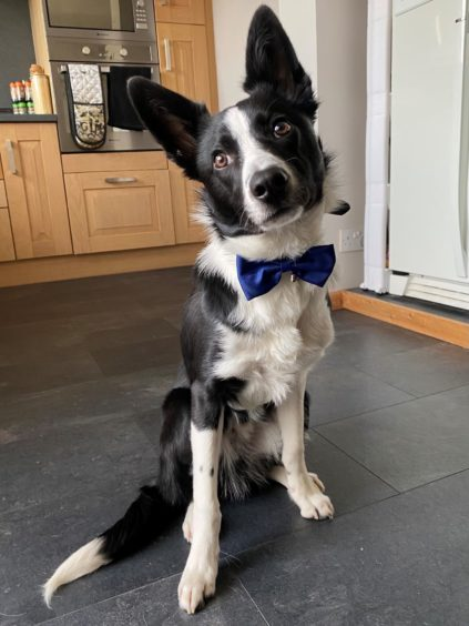 Looking very smart in his bow-tie is Archie, who lives with Abbie Turnbull in Aberdeen.