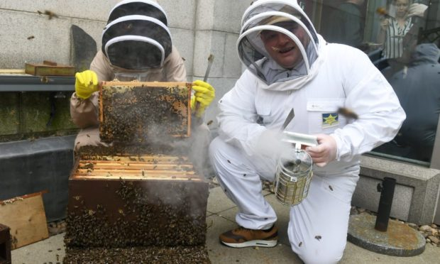 A pair from Alcohol And Drugs Action tend to some beehives on the rood of His Majesty's Theatre. Picture by Chris Sumner.