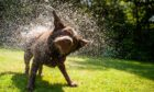 Can humans have their very own 'wet dog' smell?