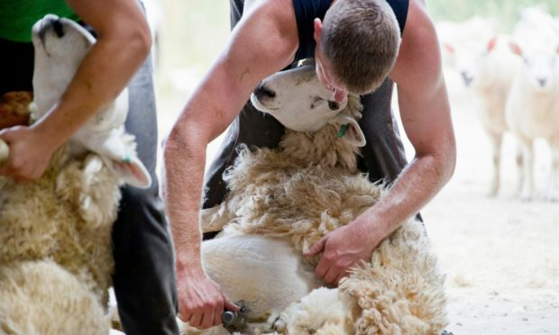 British Wool says demand is growing for wool.