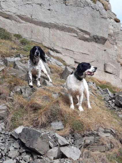 Sprocker Clover, and Diesel the springer spaniel, pictured at Bennidusty Bay, Macduff. They live in the town with owner Andrew Ellis.