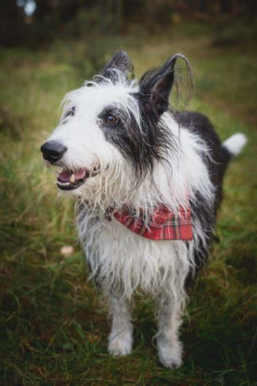 The very handsome and dapper Sid lives with Cheryl Stuart in Elgin.
