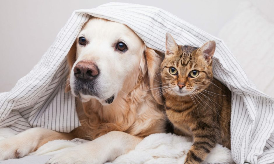 Advice issued following a new missing pet scam circulating in Scotland.