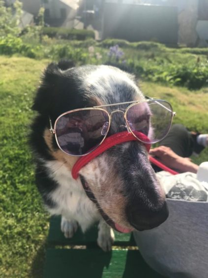 This cool dude is Storm, the border collie, enjoying the sunshine. He lives with the Weirs in Findochty.