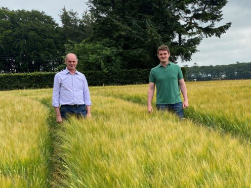 Charlie and Murray Horn in their winning crop of Laureate spring barley.