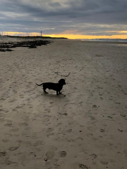 Dougal the dashound, aged two, at Lossiemouth Covesea beach. Thanks to Debbie Banfield for sending in the pics.