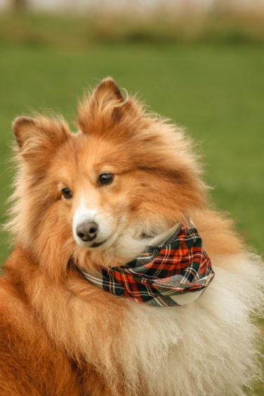 Just look at this beautiful dog, called Misty, with her lovely tartan neckerchief. Misty lives in Fort William with owner Debbie Brown, and the photo was taken at Canal Parks, Caol.
