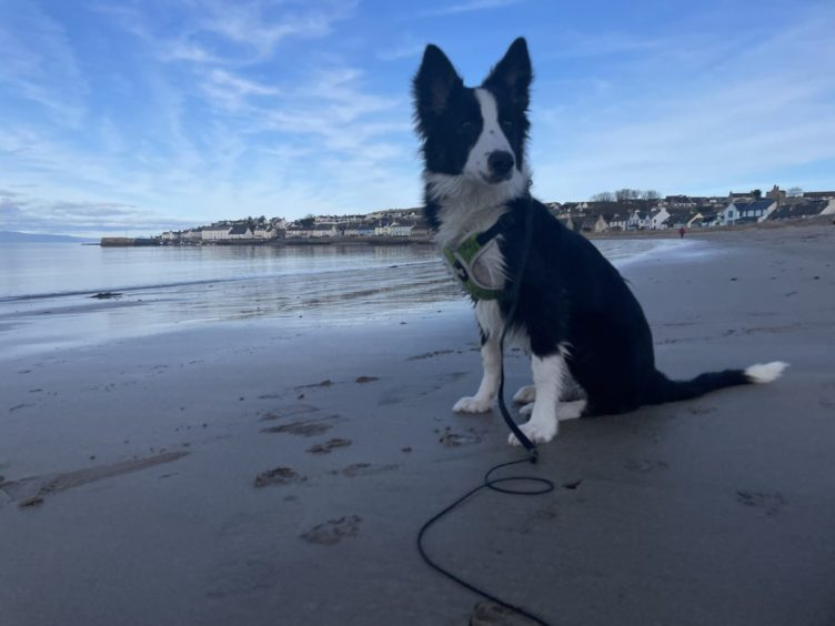 This is buddy, a nine-month-old border collie, pictured at Portmahomack beach. Thanks to Ross Groves for sending us the photo.
