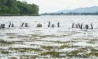 The Lochaber Snorkel Trail has been put together by the Scottish Wildlife Trust and West Highland College UHI.