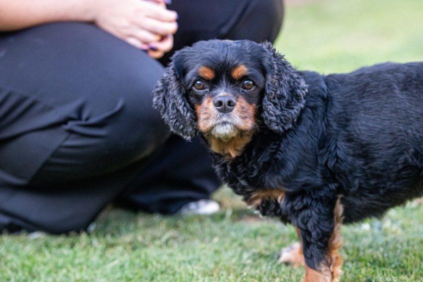 Toni Gordon's dog Archie