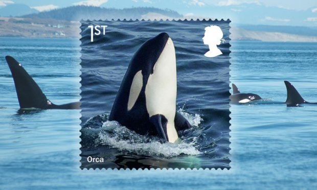 A new stamp collection from the Royal Mail features this stunning image of an orca photographed near Shetland.