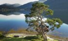 The Treehouse at the Lodge overlooking a calm Loch Goil