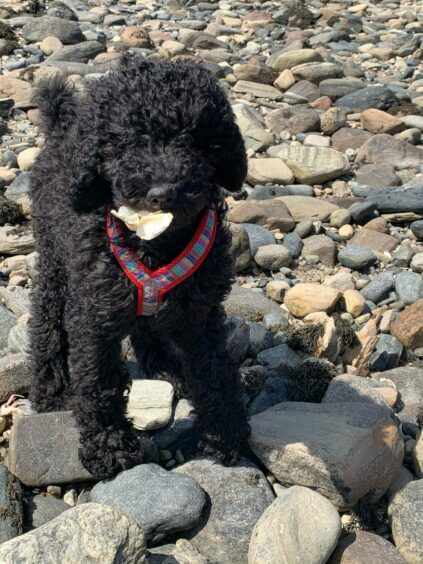 Look into my eyes. This is Freddie, enjoying a walk at Tongue. Freddie lives with Bozena Mackintosh in Inverness.