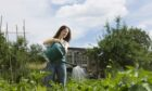 Allotments offer so much to an array of gardeners.