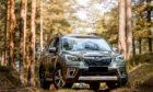 Subaru in Scotland woodand