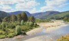 Glen Feshie's landscape has been transformed over the last 17 years