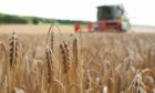 European crop yields are better than expected this harvest, according to new figures.