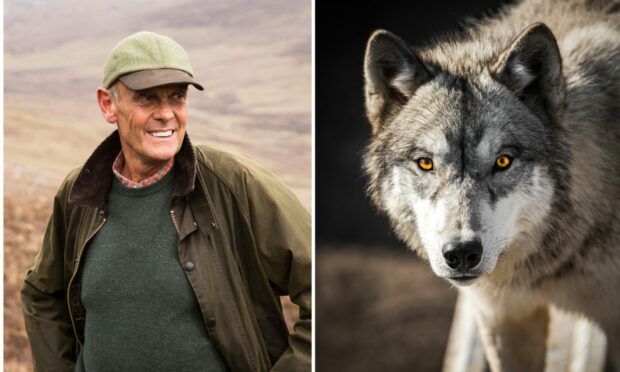 Paul Lister, the owner of Alladale Wilderness Reserve in Sutherland, plans to reintroduce wolves to Scotland.