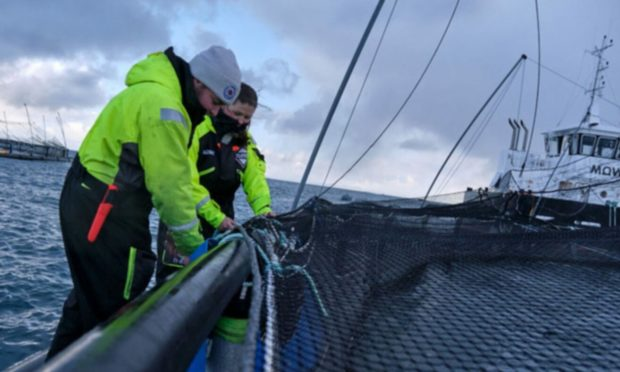 Workers at a Mowi salmon farm in the Outer Hebrides.