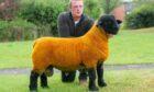 David Moir with the 5,000gn Cairness ram lamb.