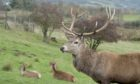 FLS is to carry out a cull of female deer in September