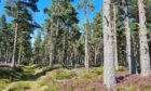 An area of Scots pine forest near Dunphail, Moray.