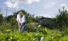 Allotments are increasingly popular - but waiting lists are long